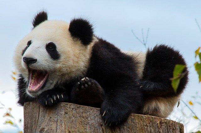 Pénalité Panda de Google