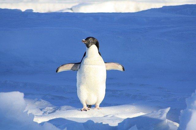 Penalite Pingouin par Google